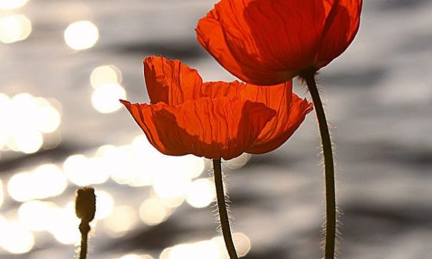 "Poppies for Remembrance? John McCrae ""In Flanders Fields"""